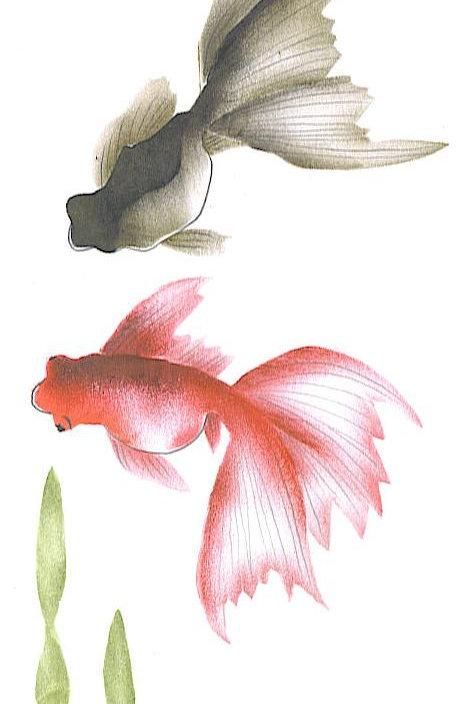 Sluierstaartvissen