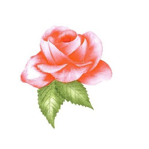 Open roos in verschillende kleuren