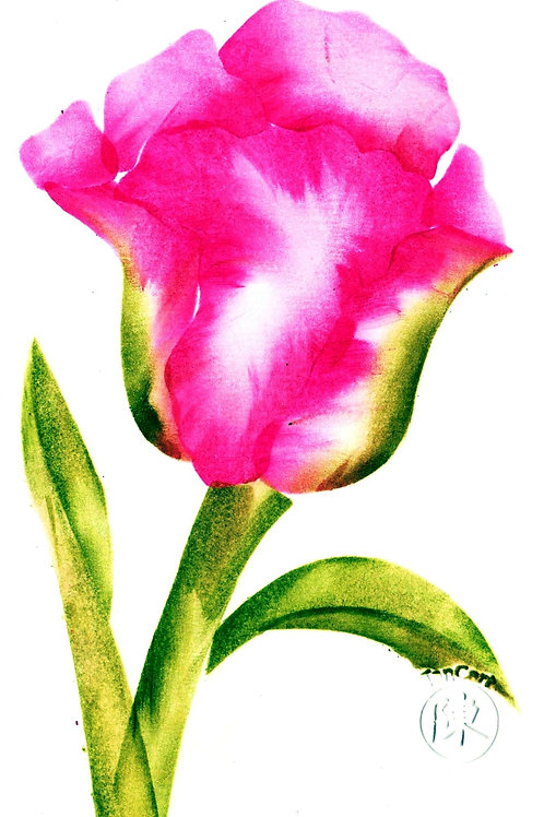 Grote tulp