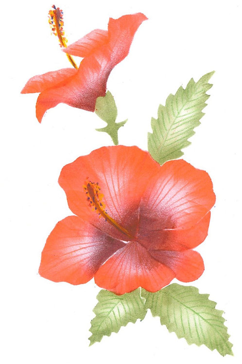 Grote Hibiscus