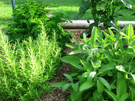 Botanical Bang for your Buck: the Herb Garden Beats All