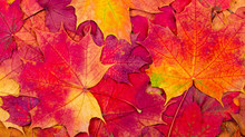 """Our three """"Go to"""" Autumnal Essential Oil's!"""