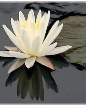 Lotus Mind_2.jpg