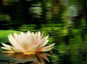forest pond2.JPG