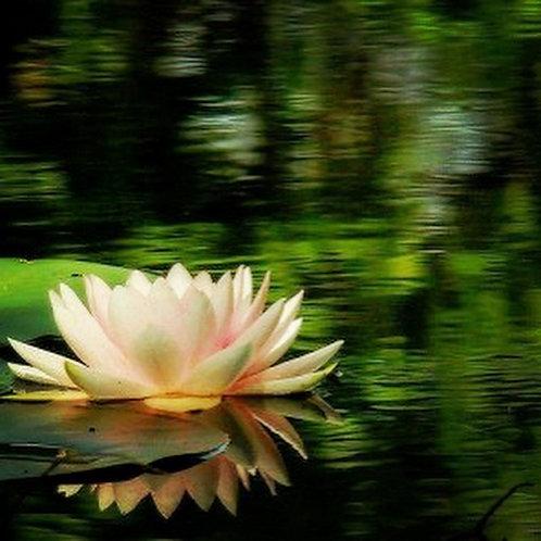 Forest Pond Meditation Program