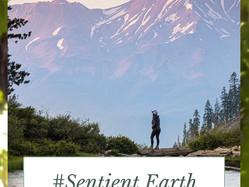 What's unique about the #Sentient Earth Meditation?
