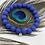Thumbnail: Merveilleux Bleu Roi
