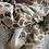 Thumbnail: Poisson Camel