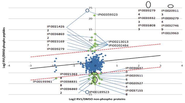 SILAC phosphoproteomics data analysis