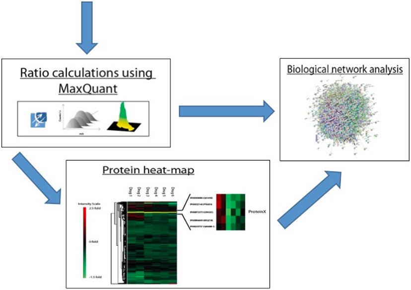 SILAC proteomics data analysis process
