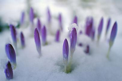 flower-3161201_1920.jpg