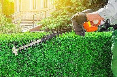 hedgepruning.jpg