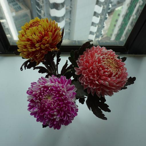 20170501GW香港バンコク 289