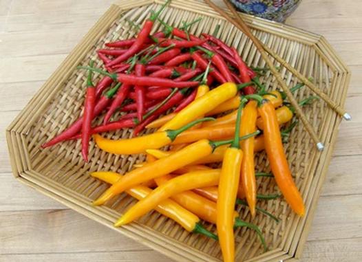 Chile Pepper, Orange Full Moon or Red Vesuvius