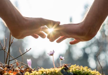 Cura através do contato com a natureza, é possível?