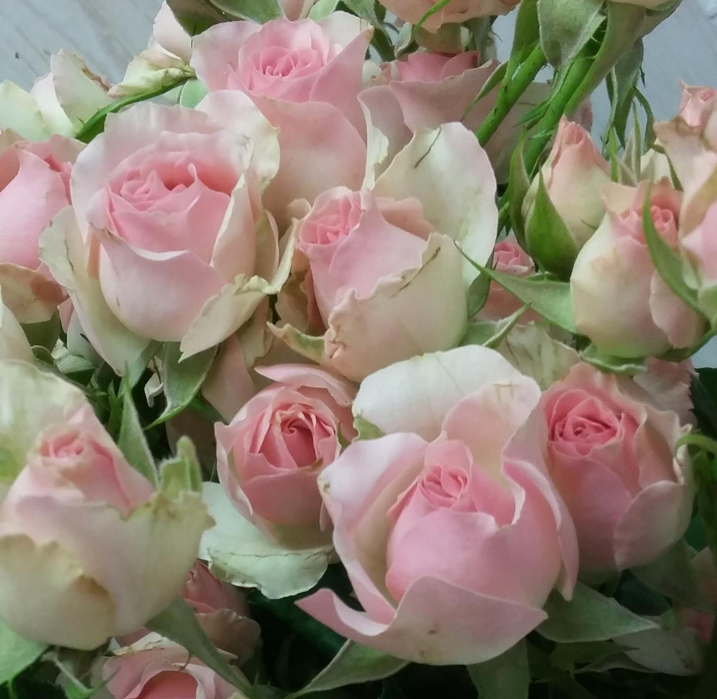 Rosen und viele andere Schnittblumen