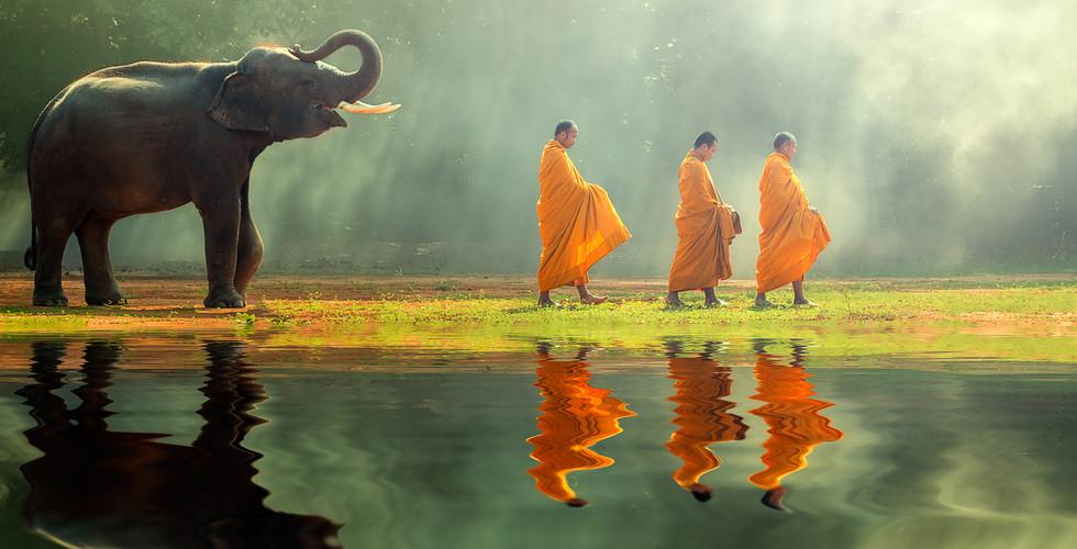 탁발하는 스님과 어린 코끼리