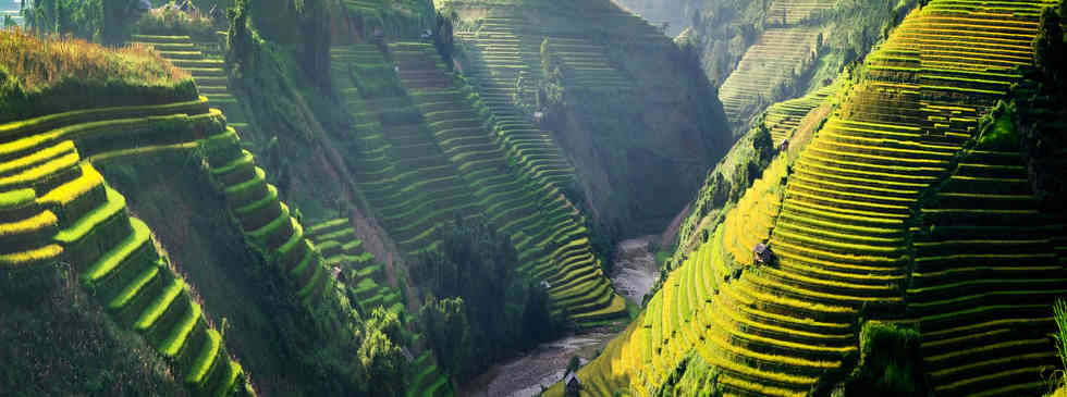 계단식 논   Terraced rice field