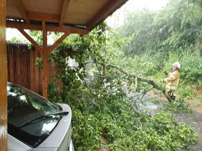 Unwettereinsatz - umgestürzter Baum mit Dringlichkeit