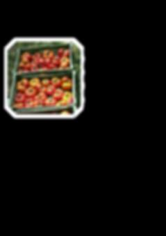 Tomatenpartnerschaft 1