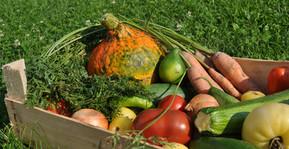 Gemüsekisterl-Quer.jpg
