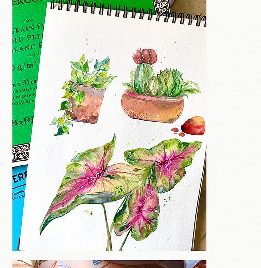 Modern Watercolour Workshop (2 Weeks)