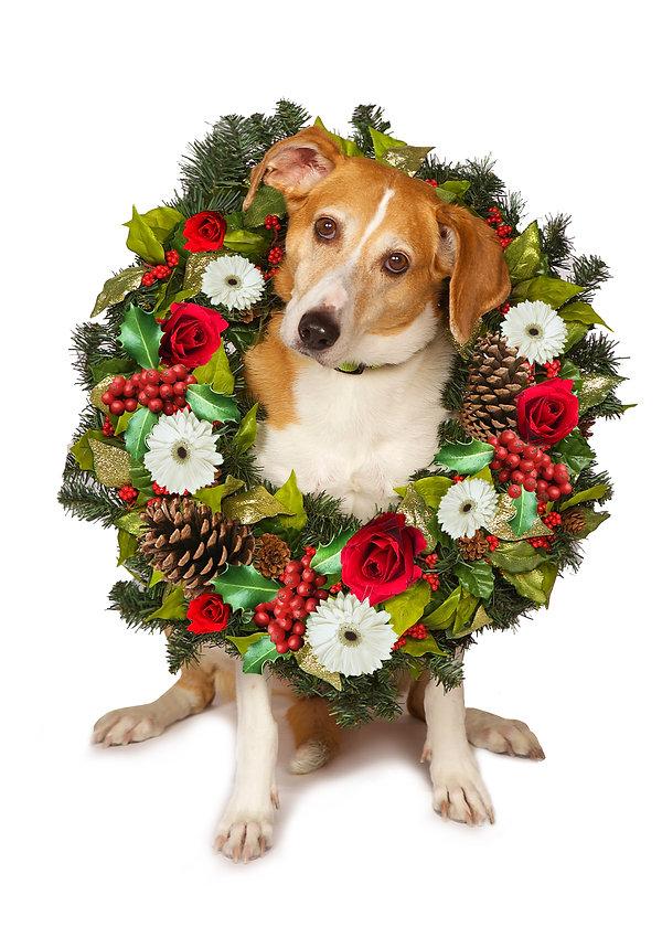 Cute Christmas Dog Photo