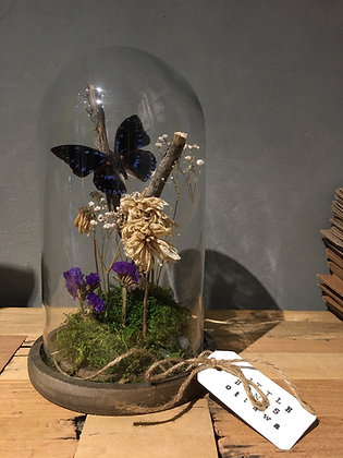 LITTLE BONES Lge. Butterflies Terrarium (does not ship)