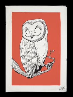 Salmon Owl
