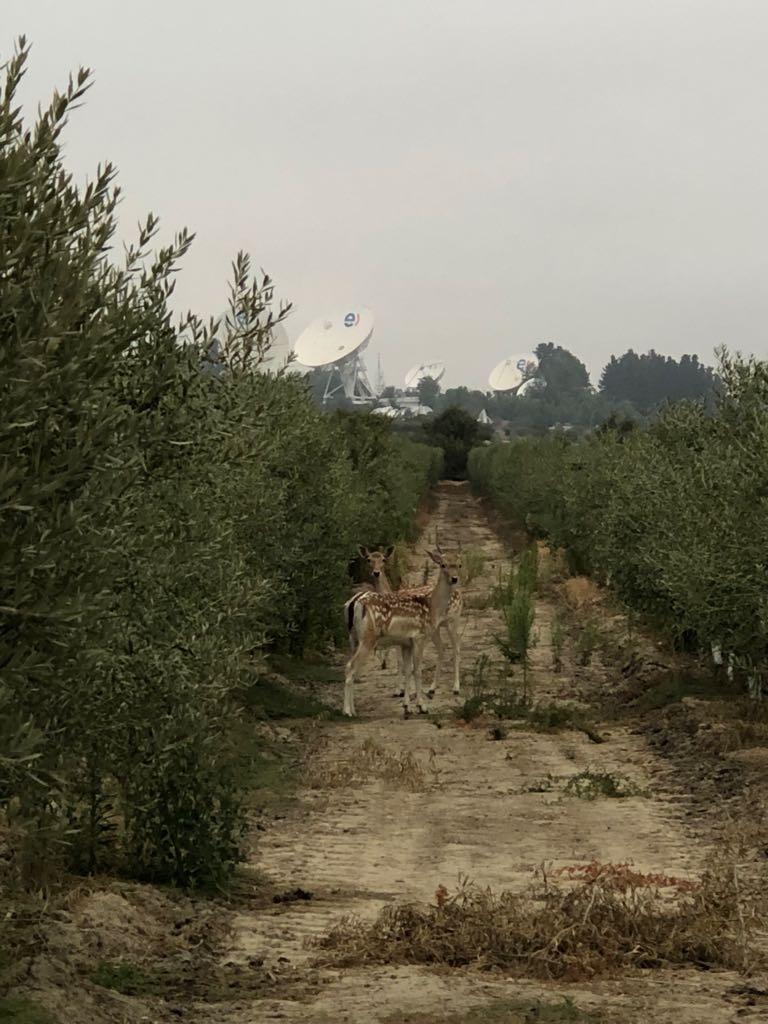Ciervos Ciervos Agroreservas San Pedro de Melipilla