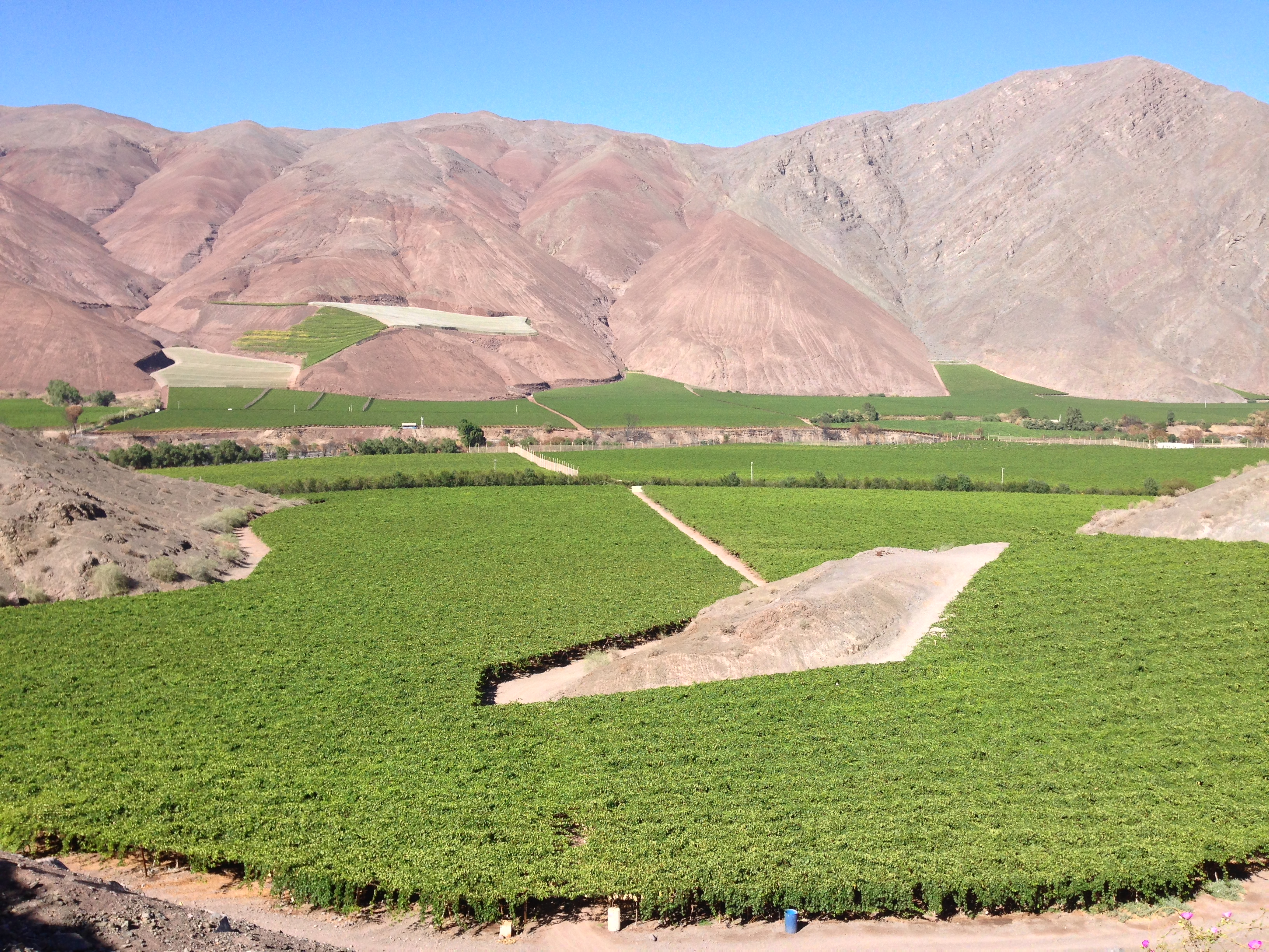 Agricola el Huingán Tierra Amarilla Copiapó