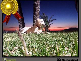 Ya tenemos GANADOR del 2º Concurso de Fotografía PETCLUB