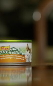 Cat Food Spot