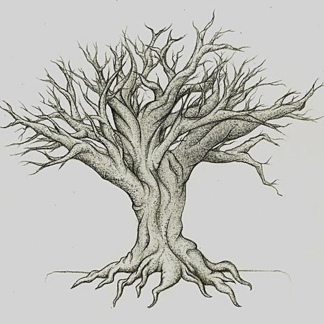 Boulder Roots
