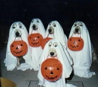 Halloween Safety: Keep Your Ghouls and Boys Safe!