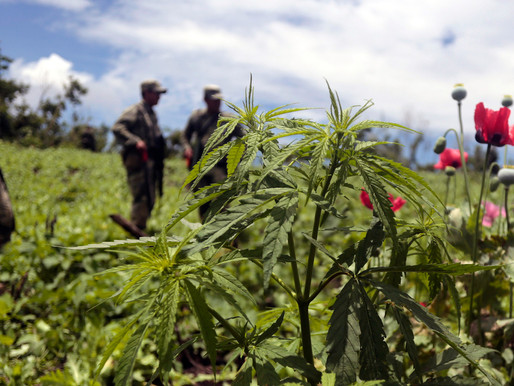 Struggle and Solidarity: Learning the Truth About the Drug War in Mexico