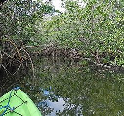 Mangrove Kayaking.JPG