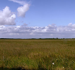 Sawgrass Marsh Habitat (1).JPG