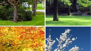Les bienfaits de la réflexologie et du Shiatsu au changement de saison