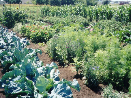 Tiller School Teaching Garden in Beaufort