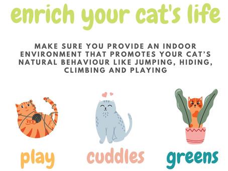 Keeping your indoor cat happy