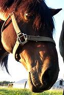 NZ Horse Rescue & Welfare Groups
