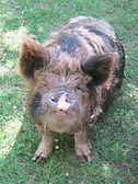 NZ Livestock Rescue & Welfare Groups