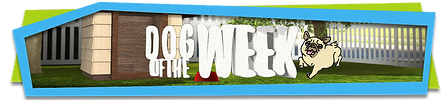 Pet Life supplied magazines to What Now's Dog of the Week TV segment