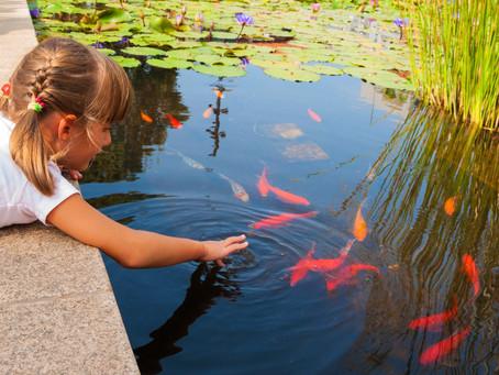 Spring fish care