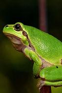 NZ Amphibian Rescue & Welfare Groups
