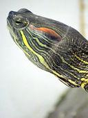 NZ Turtle Rescue & Welfare Groups