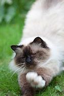 NZ Cat Rescue & Welfare Groups