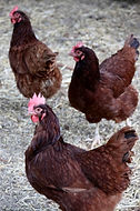 NZ Bird Rescue & Welfare Groups
