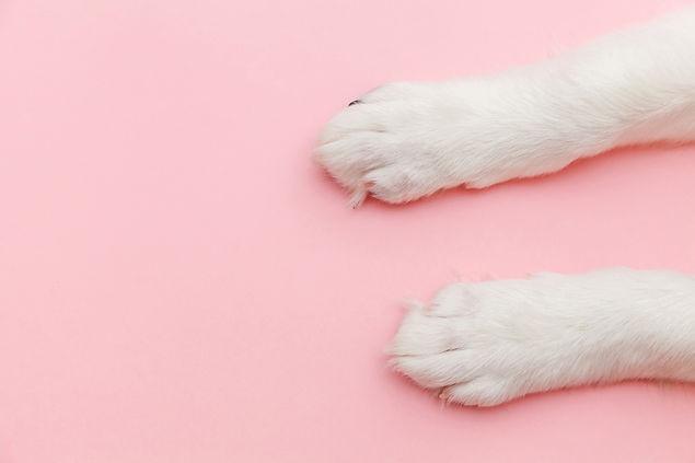 Pet Life Paws